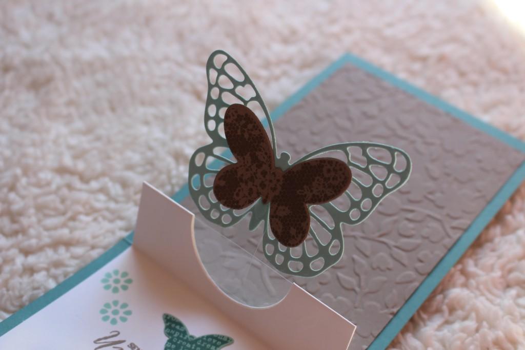Schmetterlingsgruß_5